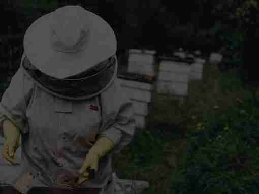 Project Hive: Redesigning policy development in NSW government
